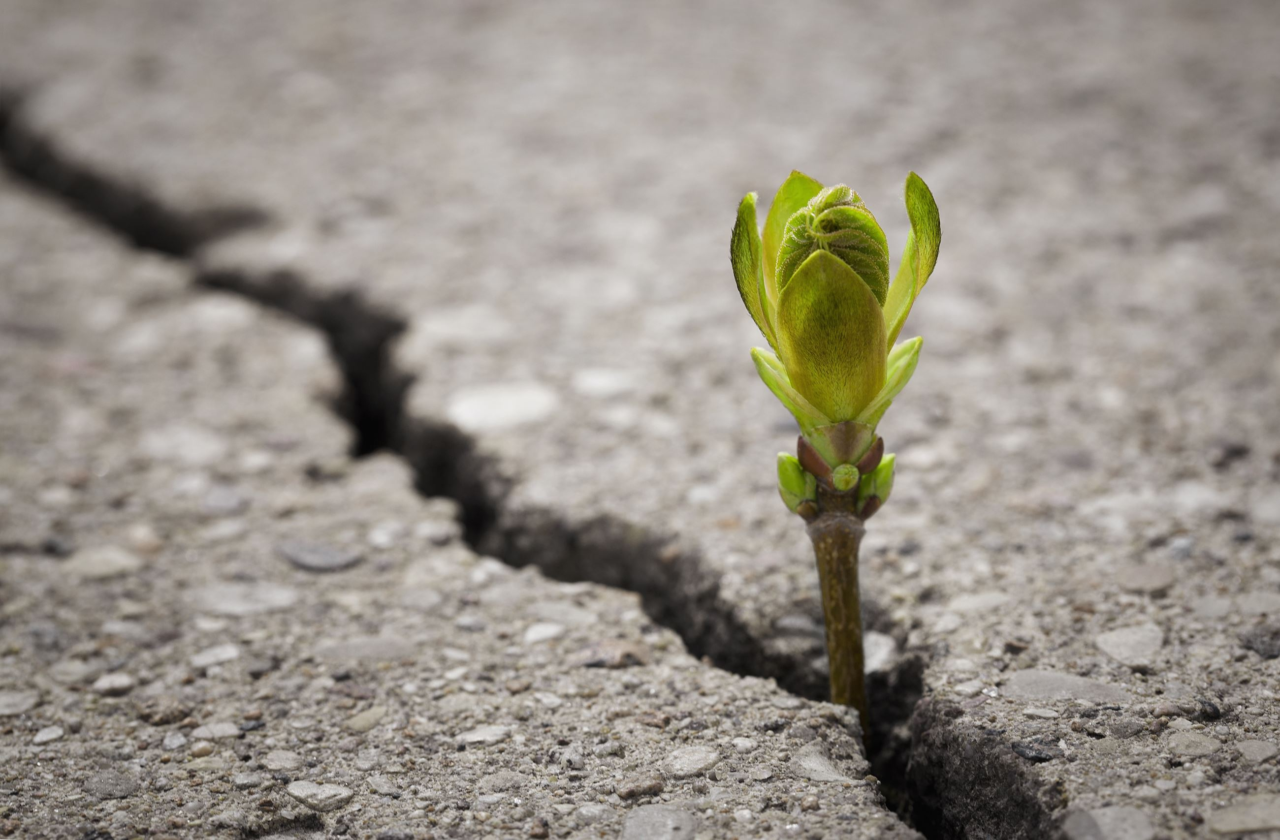 Small green plant emerging through a crack in a paved sidewalk